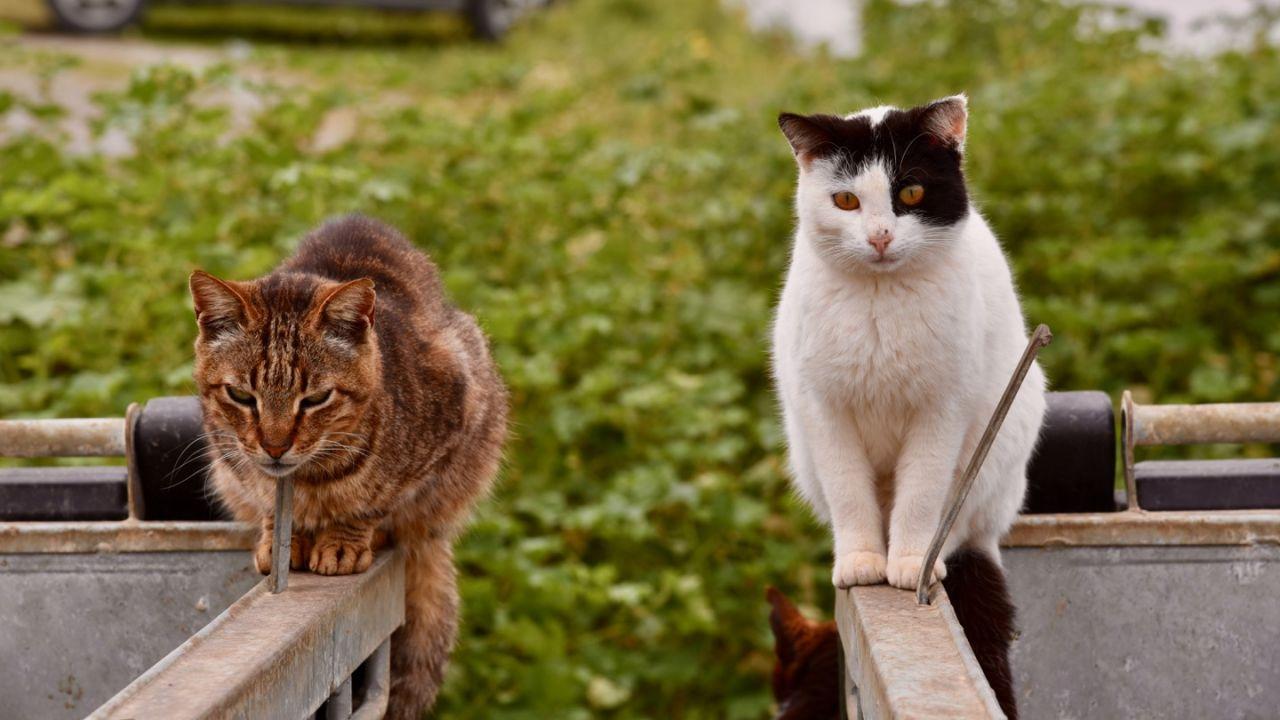 Katzen auf Mülltonnen in Panormos